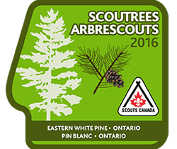 Scout Trees 2016 – Thank You and Pictures